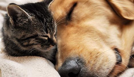 Golden Dog Strzyżenie Psów żywiec Fryzjer Dla Psa I Kota